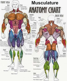 anatomy-big